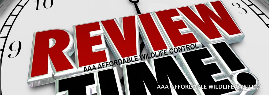 Wildlife Control Reviews, Great Wildlife Removal Toronto Reviews. Highly Rated Wildlife Removal Testimonials and Reviews. Affordable Wildlife Control, Raccoon Removal Toronto Reviews, Squirrel Removal Toronto Reviews.