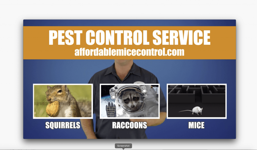 Affordable Mice and Pest Control Mississauga, Bramoton, Oakville