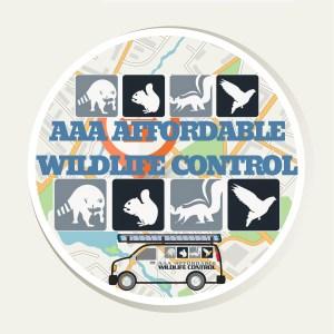 Wildlife Control - AAA Affordable Wildlife Control