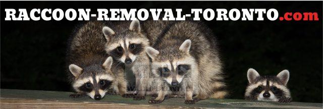 Raccoon Removal Toronto logo, Raccoon Control in Toronto