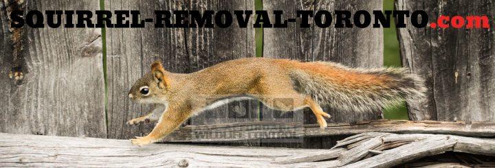Squirrel Removal Toronto logo, Squirrel Control Toronto
