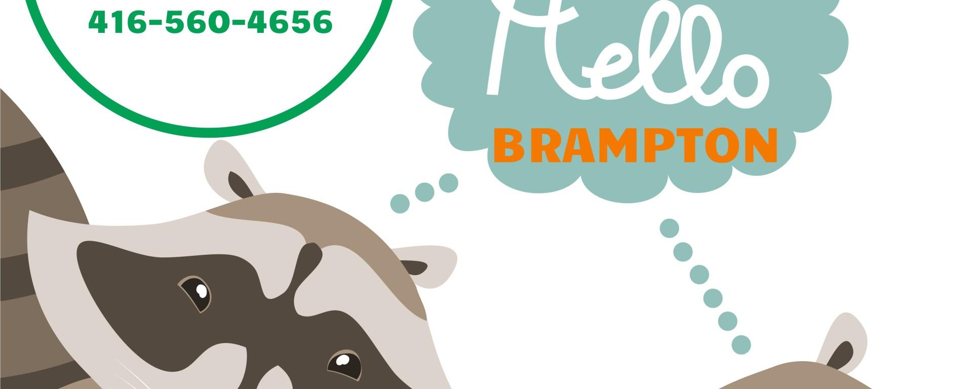Wildlife Removal in Brampton, Squirrel Removal Brampton, Raccoon Removal Brampton