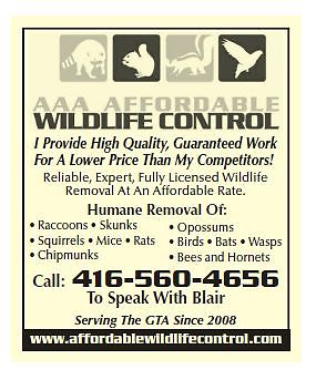 Wildlife Removal, Wildlife Control Toronto