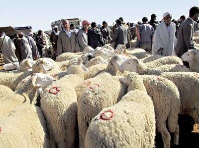 السعودية تعلن الجمعة 11 غشت أول أيام عيد الأضحى