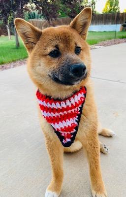 patriotic puppy bandana
