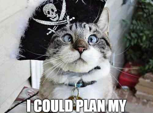 Image of cross eyed cat in a pirate hat