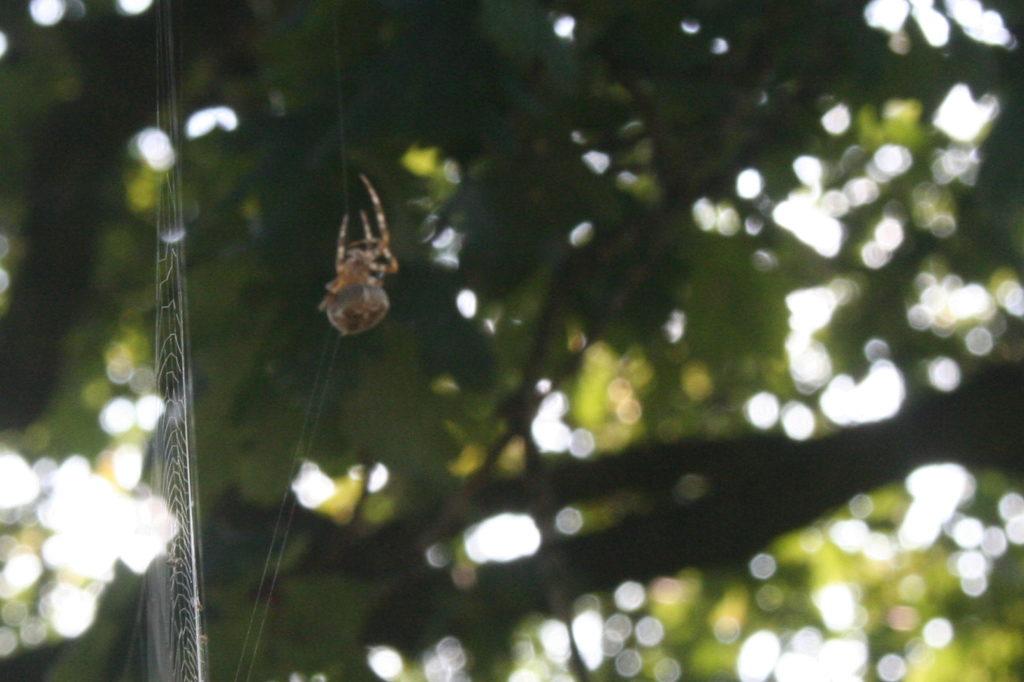Spinnen web van opzij