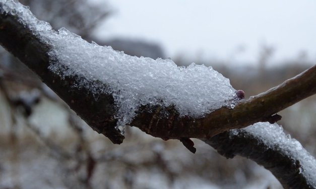 IJzel en Sneeuw in de Kiersche Wijde