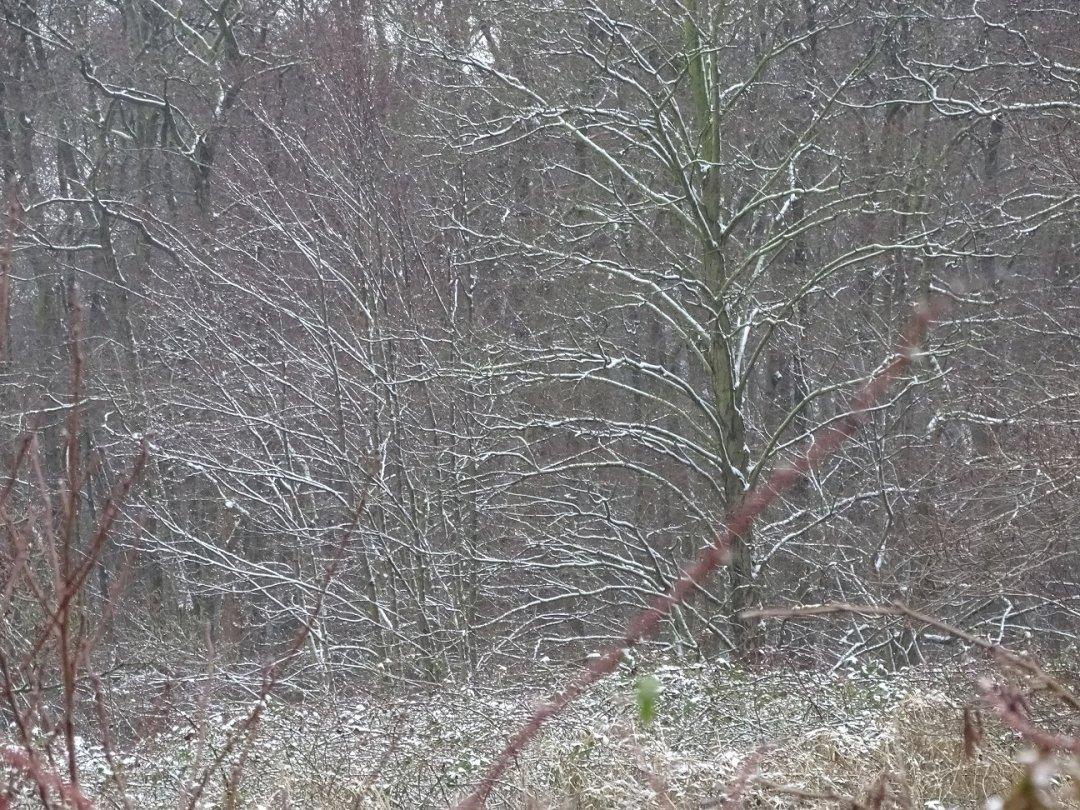 Mooie bomen, witte takken