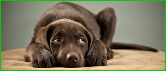 PETA USA                                                     erwirbt Aktien von                                                     Bayer und Zoetis