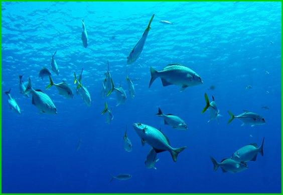 Fische: intelligente Wasserbewohner