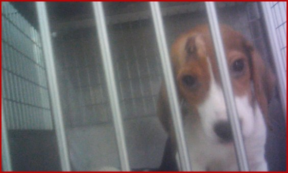 Gequälter und misshandelter Hund