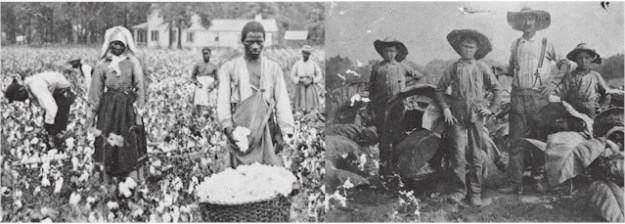 Sharecroppers pick cotton in Georgia in 1898 (Library of Congress) - Sharecroppers on Wessyngton Plantation