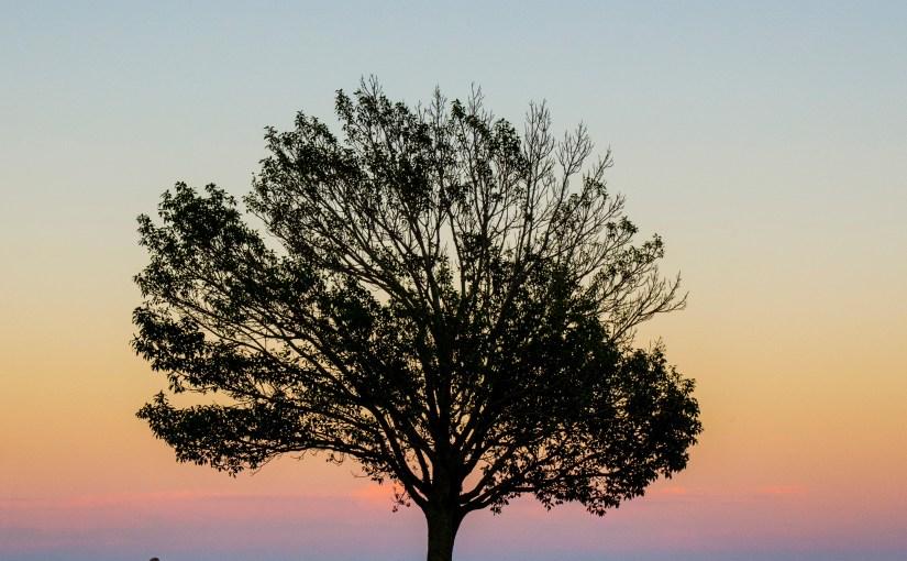 Wisdom Day 3 November 2016: Tree of Life