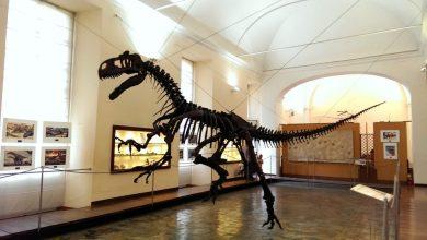 مدينة نابولي متحف العلوم الطبيعية
