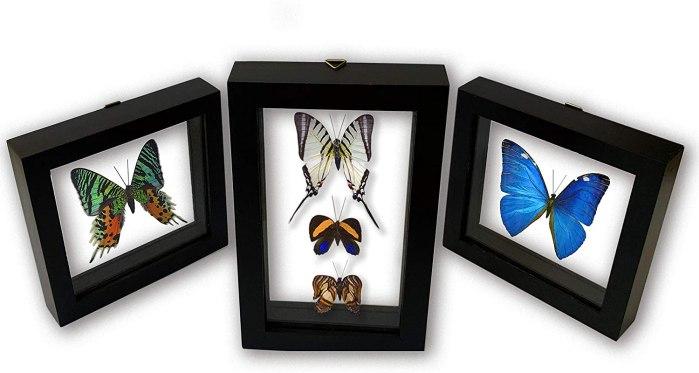 butterflies-3-frames