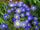 most-beautiful-flowers-40-photos-1
