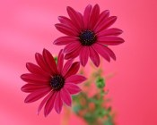 most-beautiful-flowers-40-photos-2