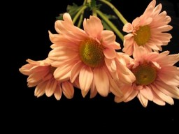 most-beautiful-flowers-40-photos-35