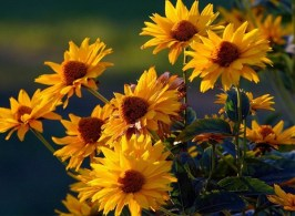 most-beautiful-flowers-40-photos-38
