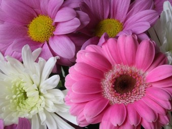 most-beautiful-flowers-40-photos-39