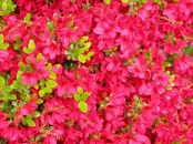 most-beautiful-flowers-40-photos-6
