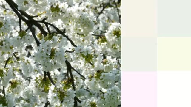 Colors-2016-White