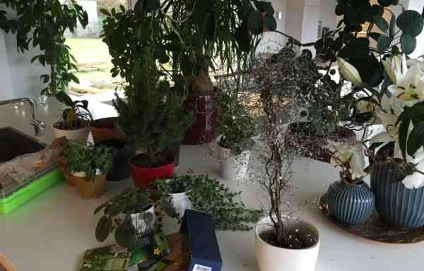 Indendørs planteprojekt
