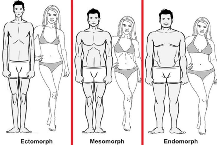 bodytypes 2
