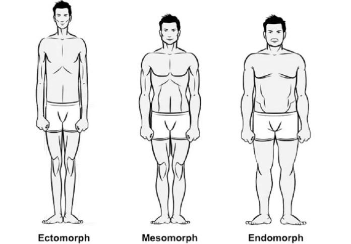 bodytypes 3