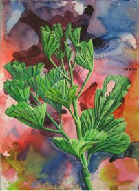 Geranium Leaves 1, 2008, water color paints and pencils on high Gsm Paper, By Aaron O'Brien. Sold