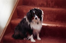 Brisby on the steps