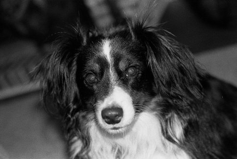 Brisby