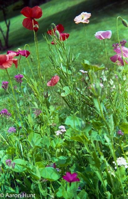 Wildflowers, too.