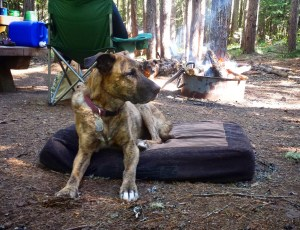 An old dog lies in a campsite by a campfire.