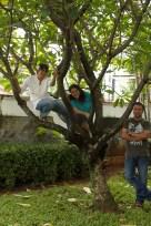 Monkeys in a tree