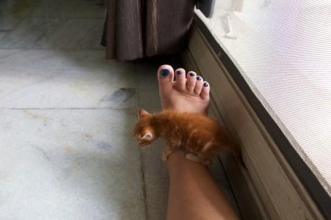Ginger at home