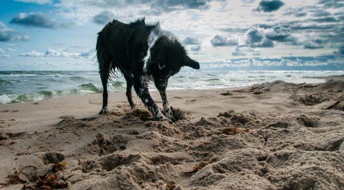 The Art of Living: Digging Deeper