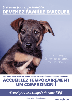 cause animale famille accueil chiot