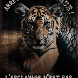 aaska-non-aux-cirques-animaux2