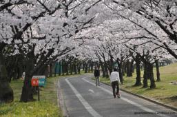 shonai park nagoya japao-8