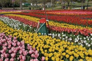 tulipas park kiso gifu japao-48