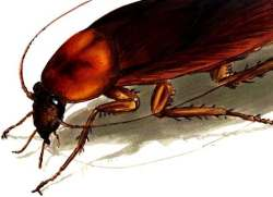 Safari en Orcasitas (Usera): a la caza de la cucaracha