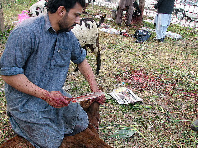 A goat is slaughtered according to halal techniques. (Not at Al Madani.) | Scott Christian (Flickr)