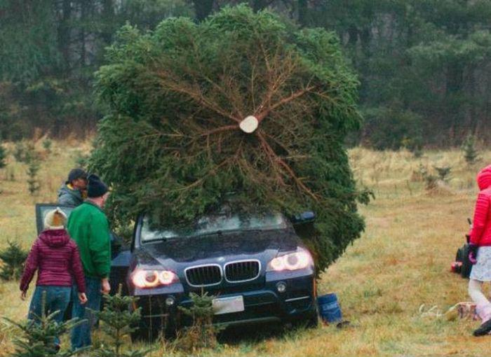 dieses-jahr-faellt-der-weihnachtsbaum-etwas-groesser-aus