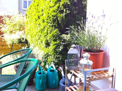 A couple new additions - English Lavender (Lavendula angustifolia).