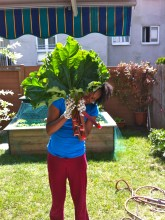 Saturday's harvest consisted of about 6 stalks; those things are bigger than my head! Yay!