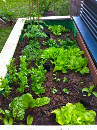 High-bed is mulched & watering system is in. Spinach is giving it's last performance; got to figure out what I should put there.