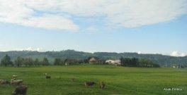 Way to Mt Rigi, Switzerland (7)