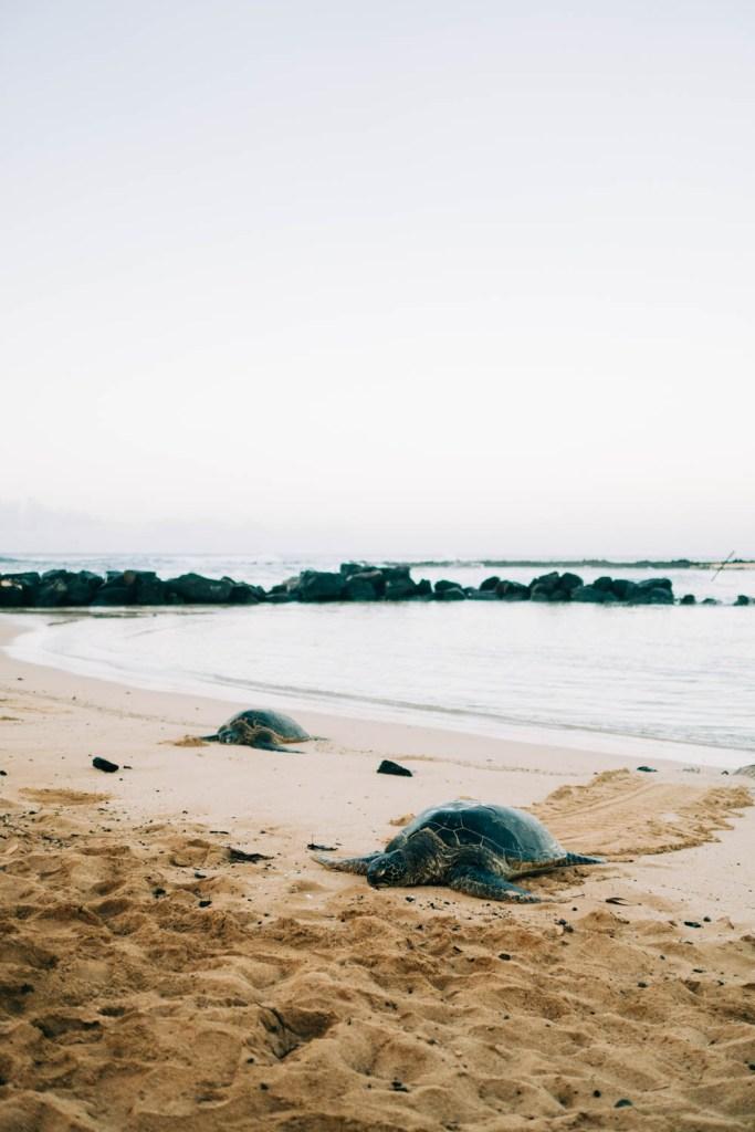 Poipu Shores Kauai